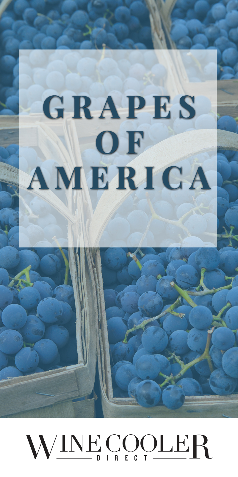 Grapes of America